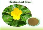 high quality free sample damiana leaf extract powder