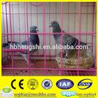 pigeon breeding cage