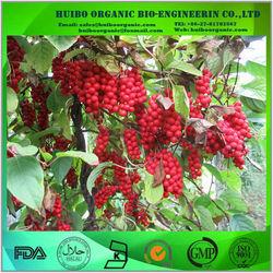 Organic chinese magnoliavine fruit / chinese magnoliavine fruit extract powder / schizandra fruit extract