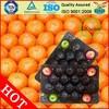 Fruit Vegetable plastic Packing Tray 2014 hot wholesale