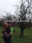 CE Electric power pruner fruit tree and garden (promotion set long arm pruner plus electric hand pruner)