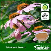 Factory sell popular echinacea purpurea extract echinacea extract