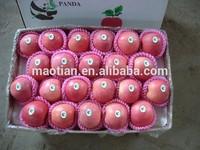 Yantai Fresh Fuji Apple 2014 new crop
