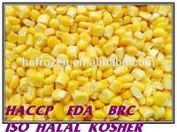 Frozen IQF frozen sweet corn