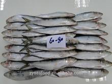 IQF Can Fish Frozen Sardine Fish