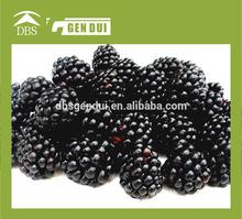 China IQF blackberry