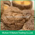 Chinois séchés champignons shiitake; séchés champignons noirs