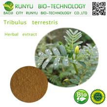 Herbal extract type natural tribulus terrestris extract