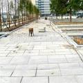 G343 chinês escadas de granito barata, granito chinês g343
