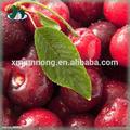 2015 frutas en conserva de tomate cherry semillas