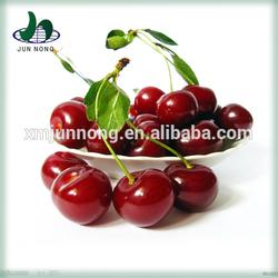 2015 Canned fruit fresh cherry fruit