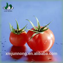 Cheap and fresh tomato sauce brand names