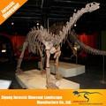 Nuevo diseño de moda de bajo precio escala 1:1 museo esqueleto de dinosaurio