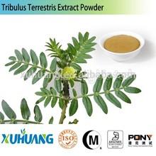 tribulus terrestris capsule powder extract/tribulus terrestris extract 40% saponins