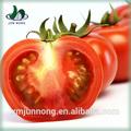 معجون الطماطم المعلبة ممتازة مصنع لتجهيز