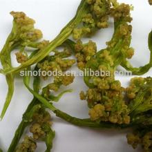 dehydrated broccoli white broccoli