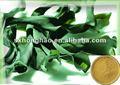 Perda de peso produto 50% fucoxanthin pó bladderwrack alga kelp extrato