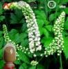 ISO&Kosher 2.5%-5% Triterpene Glycosides Cimicifuga Racemosa Extract Powder