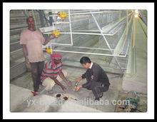 Egg Chicken Farms of Nigeria 15000 birds feeding drinking line