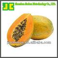 100% papayas natural extracto en polvo