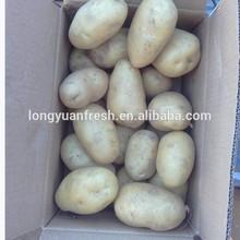 fresh russet potato packed in 10kg carton