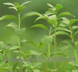 China Stevia