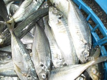 east sea seafood live fish horse mackerel in sale