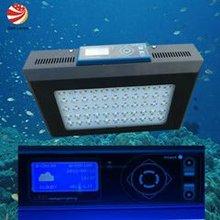 aquqrium lamp with coral