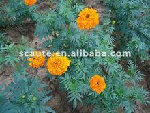 Xanthophyll / xanthin CAS NO. 127-40-2
