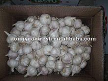 Chinese new crop garlic 2012