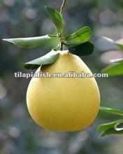 Chinese pomelo fruit