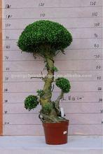 boxwood topiary tree plastic grass