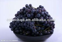 fresh thomson seedless grapes