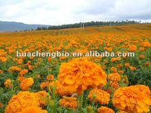100% Natural Marigold Extract Powder (5%-20% Lutein, 5%,10% zeaxanthin)