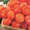 NON-GMO, Farmland Organic Fresh Tomato 2013
