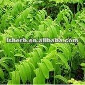100% natural Polygonatum odoratum (Mill.) Druce extract