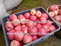 Grade A fresh juicy & crispy fuji apple