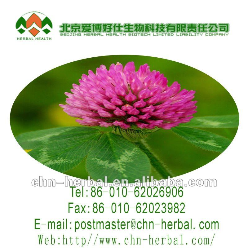 high quality--red clover extract/red clover extract powder