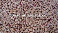 Best Light Speckled Kidney Beans 2015 crop