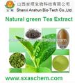 Extracto de té verde 50% galato de epigalocatequina ( egcg ) con los polifenoles del té