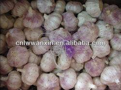 china natural garlic 10kg carton pack