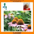 L'acide chicorique - herbes médicinales - echinacea extrait
