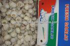fresh garlic new crop 2013 EU STANDARD