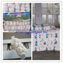 chinese fresh organic garlic 2012 new crop