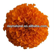 Marigold (Tagetes erecta L.) Extract with Lutein HPLC/UV5% - 90%