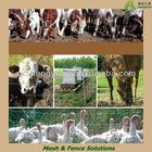 Duck Farm Field Mesh Fence