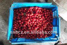 natural cherry tomato--aid digestion chinese brand dried cherry tomato