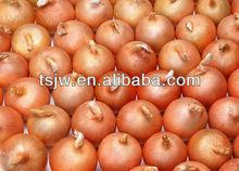 2012 new fried , fresh onion