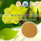 Evening Primrose Extract Oil