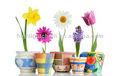 Composto uso de fertilizantes para plantas flores culturas 20 - 20 - 20 N P K